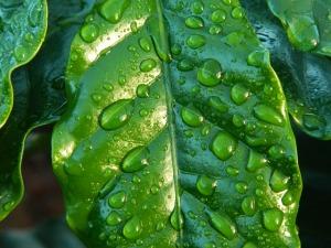 leaf-654121_640
