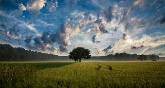 tree-247122__180